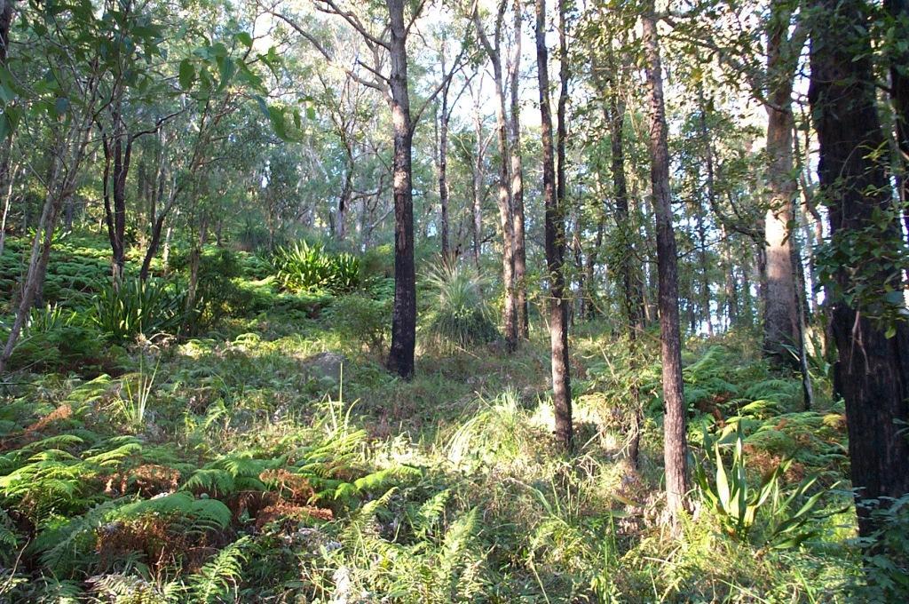 bushland reserve